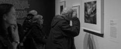 Man looks at Ansel Adams print